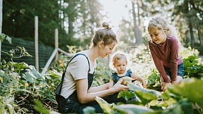 Organic Wild Animal Control: Repellents for Organic Gardening