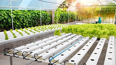 40 Hydroponic Garden Terms: Must-know Vocabulary for Growers