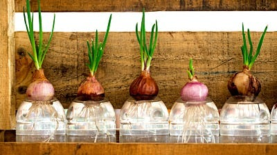5 Common Mistakes Made in Hydroponic Gardens