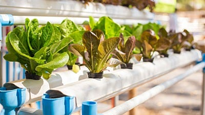 5 Options to Cool Your Hydroponic Nutrient Solution