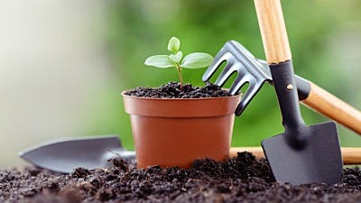 5 Simple, Must-have Tools for Indoor Gardening