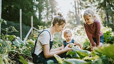 Child Friendly Gardens: Vegetable Gardens for Kids