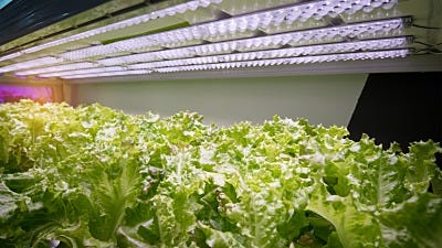 Do Hydroponic Gardens Use a Lot of Electricity?