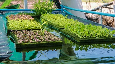 Do Hydroponic Reservoirs Need Float Valves?