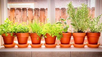 Garden Guide: How to Grow Herbs