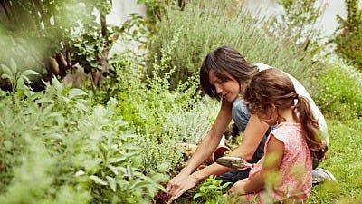 Gardening For Beginners: The Garden Game Plan