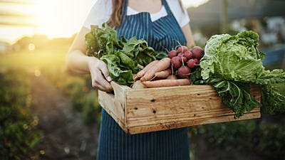 Harvesting for First-Time Gardeners