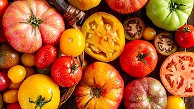 tomato plant facts