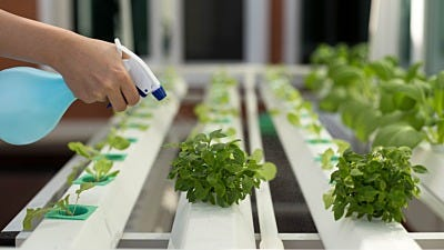 Homemade Solutions for Hydroponic Problems
