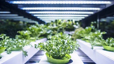 How to Choose the Right Indoor Grow Lights