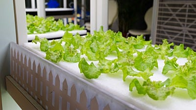 Hydroponics 101: What You Need to Start Growing