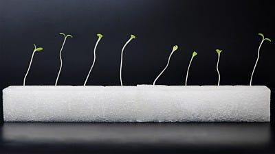 Hydroponics Vs. Soil: Do Hydroponic Plants Grow Faster?