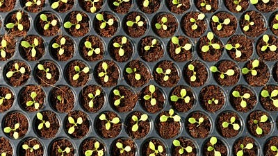 Seedling Problems Solved: ID and Fix 10 Common Problems for Indoor Seedlings