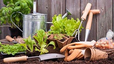 The Gardener's Tool Belt: Essentials for Gardening