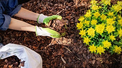 wood chips and stumps for garden