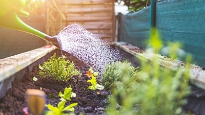 Watering Plants: How Much Is Too Much?