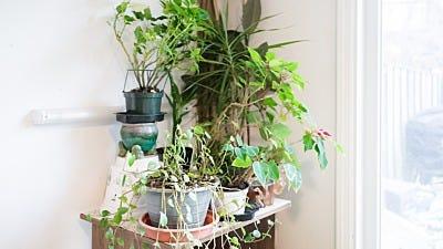 seasonal plant protection