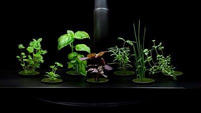 Choose the Best Indoor Garden System for You
