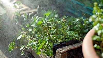 Can Perennials Grow in Hydro Gardens