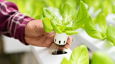 How To Build A basic Hydroponic System