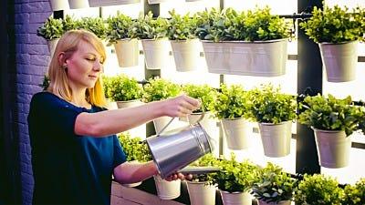 How to Manage Your Indoor Garden's Dark Cycle
