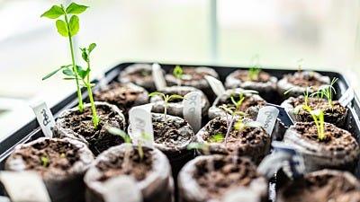 How To Use Nutrients In Your Indoor Garden