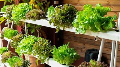 The Perfect Indoor Grow Room Setup