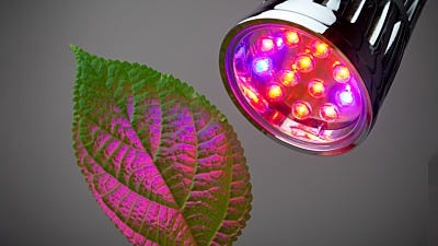 Should Grow Lights be Left on all the Time?
