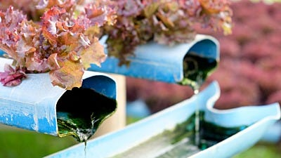 Hydroponics: The Power of Water